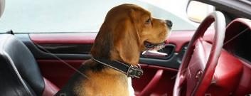perro coche taller chapa y pintura